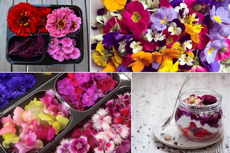 Fiori eduli commestibili erbe aromatiche fattoria delle erbe for Fiori edibili